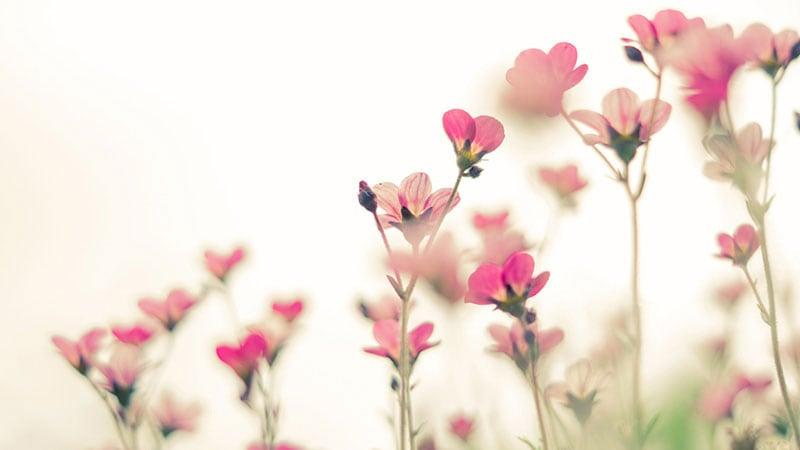 ハートの形をした花